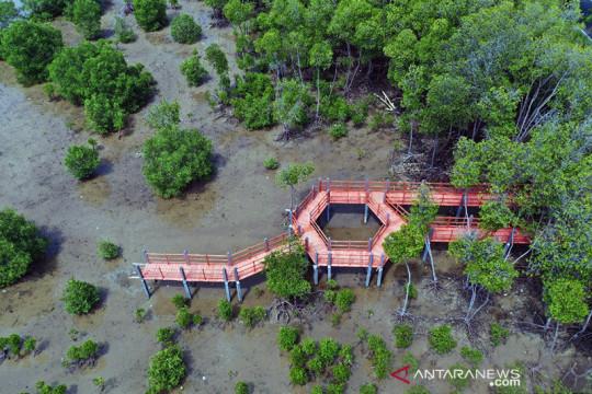 KKP: Padat karya mangrove bantu pulihkan perekonomian nasional