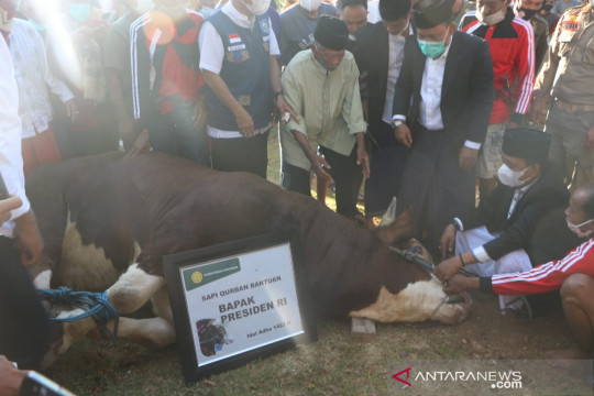 Presiden Jokowi beli sapi kurban dari peternak Lombok Timur
