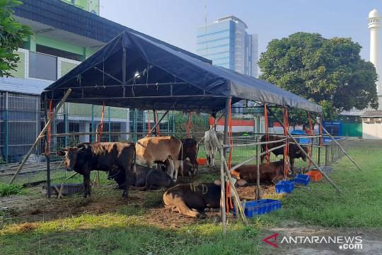Masjid Al Azhar laksanakan penyembelihan hewan kurban pada Rabu