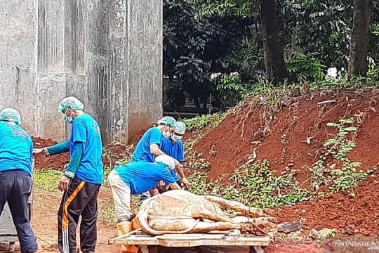 60 hewan kurban disembelih di kantor Wali Kota Jaksel pada Rabu