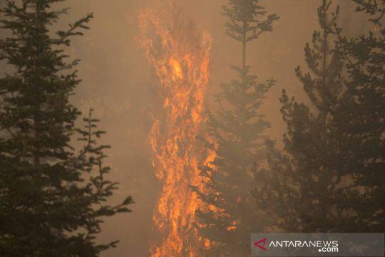 Kebakaran hutan di Oregon hanguskan wilayah lebih dari 300 ribu hektare