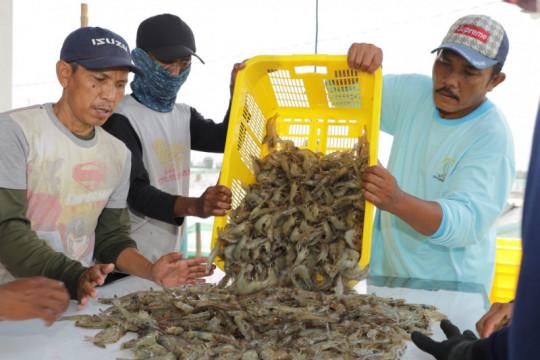 Tingkatkan produksi, KKP salurkan 2,1 juta benih udang di Aceh