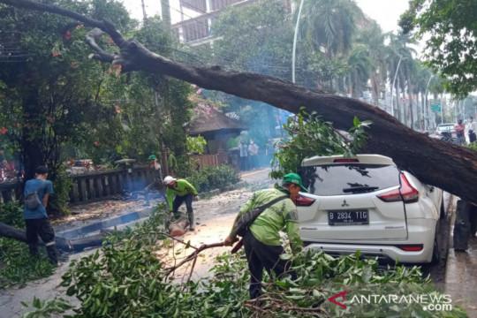 Hujan deras membuat pohon di Cut Meutia tumbang timpa satu mobil