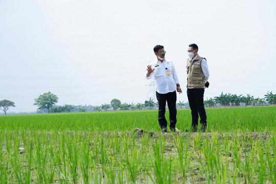 Mentan cek persawahan di Jabar pastikan stok beras aman