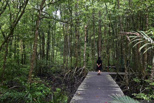 KEHATI: Rehabilitasi ekosistem mangrove mesti melibatkan masyarakat