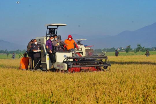 Mentan: Proses tanam-panen padi terus berlangsung di beberapa daerah