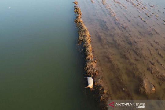 Ternak terdampak banjir di Provinsi Henan, China