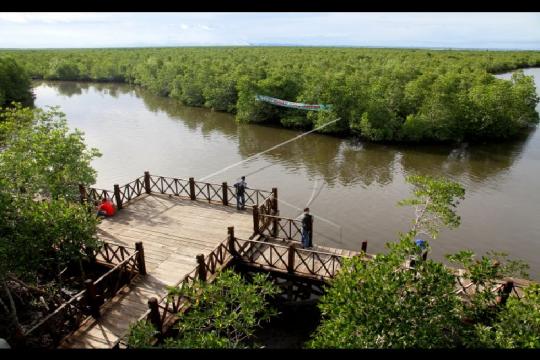 """Aceh tingkatkan kegiatan """"silvofishery"""" di kawasan hutan mangrove"""
