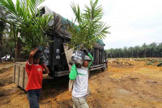 IPB: Klaim kawasan hutan jangan hambat peremajaan sawit rakyat