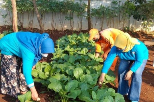 PKK Cilangkap beri pasien isoman sayuran hasil pertanian kota