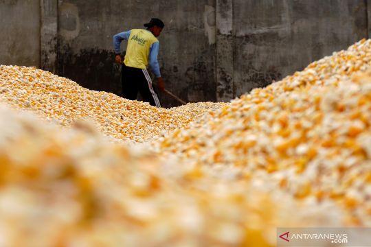 Pinsar harap kementerian kawal arahan Presiden turunkan harga jagung