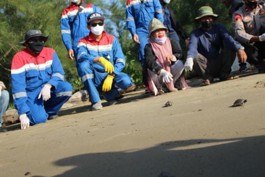 Ratusan tukik tuntong laut dilepasliarkan ke perairan Selat Malaka