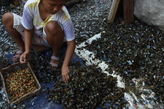 Pekerja kerang hijau di Muara Angke