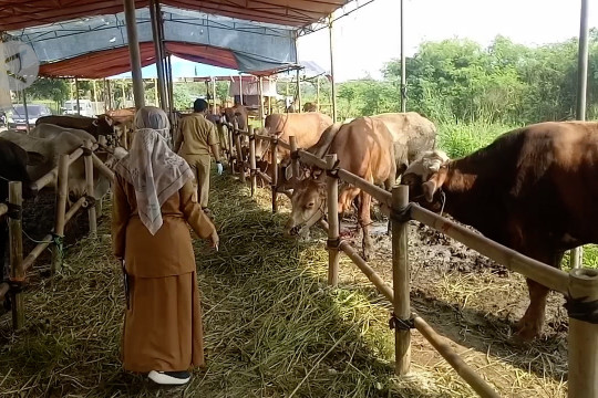 Pedagang dan pembeli hewan kurban diimbau patuhi prokes