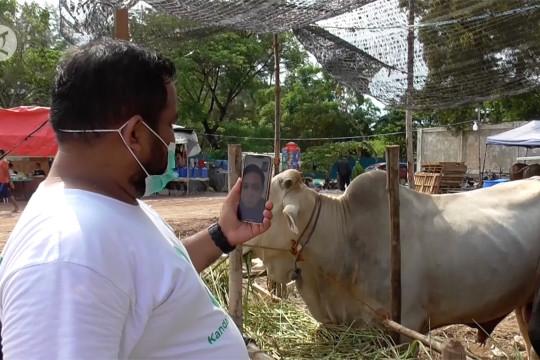 Pedagang hewan kurban Batam siasati penjualan melalui daring