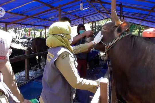 Distan Kota Semarang pantau kesehatan hewan kurban