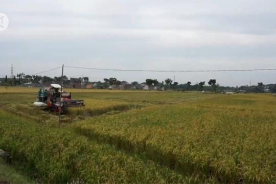 Harga turun, Dispertan Ngawi ajak petani jual gabah ke pabrik