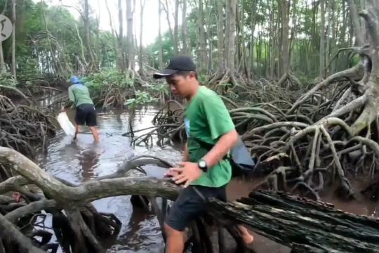 Konservasi dan restorasi mangrove efektif menekan emisi karbon