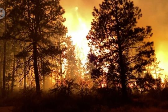Kebakaran hutan Oregon memaksa ratusan penduduk mengungsi