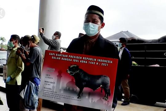 Gubernur Kalbar serahkan sapi kurban bantuan Presiden ke Kubu Raya