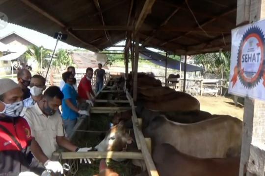 DKPPP Lhokseumawe pantau kesehatan hewan kurban jelang Idul Adha
