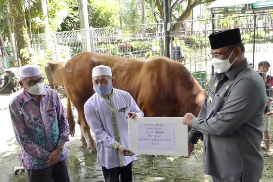 Penyerahan sapi kurban bantuan presiden untuk warga Kalsel