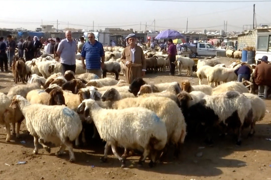 Sejumlah Negara berpenduduk muslim bersiap sambut Idul Adha