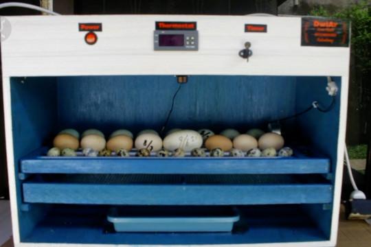 Inovasi mesin penetas telur datangkan pundi-pundi di masa pandemi