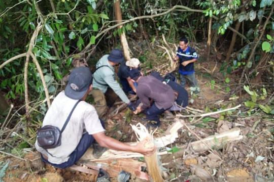 Beruang madu di Riau yang terjerat tali nilon sudah dilepasliarkan