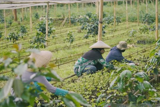 LPEI bantu tingkatkan kapasitas petani, dongkrak kualitas ekspor