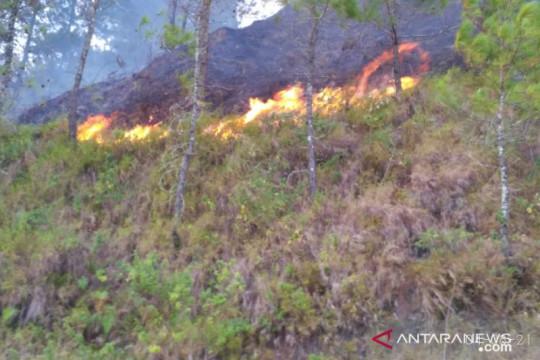 Belasan hektare lahan warga di dataran tinggi Aceh Tengah terbakar