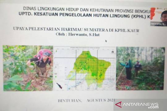 """""""Tiger Heart"""" Bengkulu serukan penyelamatan habitat harimau sumatera"""