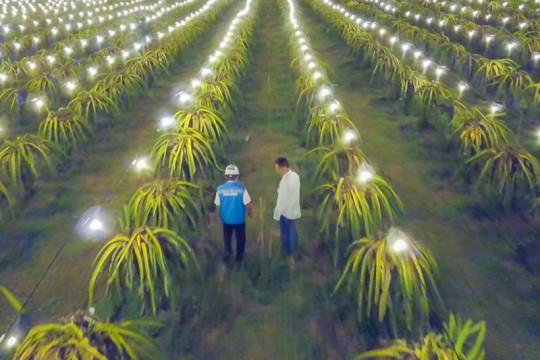 "Program ""electrifying agriculture"" buah naga merambah Mojokerto"