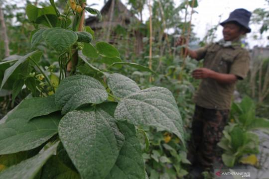 Kemarin 23,7 juta warga sudah divaksinasi, hujan abu meliputi Merapi