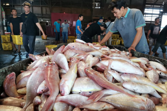 KKP-Food Bank of Indonesia buat kampanye gencarkan konsumsi ikan