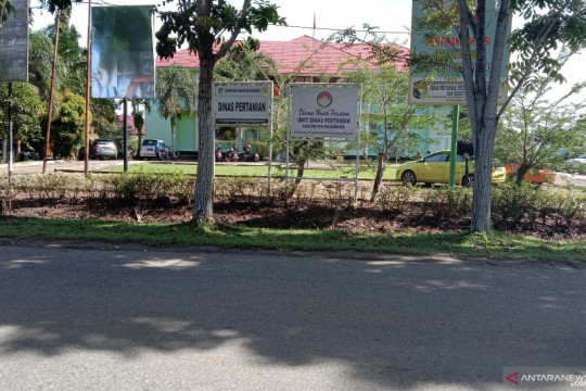 Harga tandan buah segat sawit di Mukomuko masih stabil