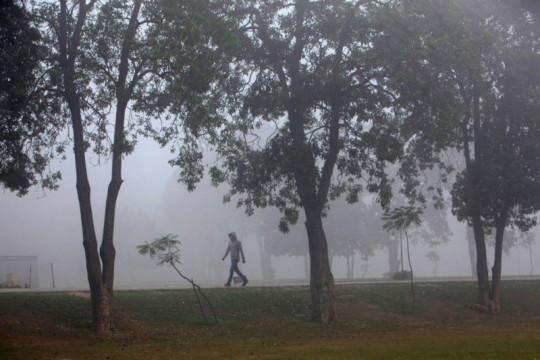 Lawan polusi, Pakistan akan tanam 10 miliar pohon