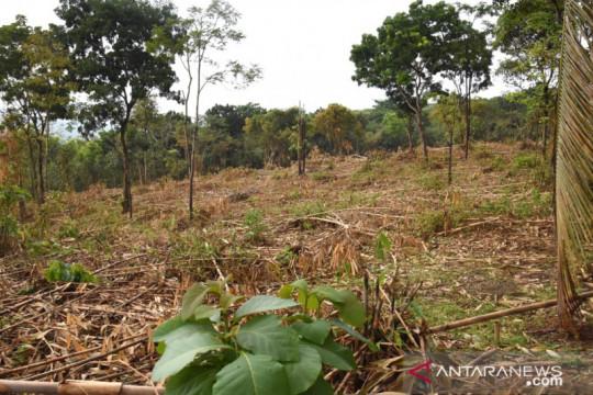 Perhutani tegaskan pembabatan bambu di kawasan hutan Purwakarta ilegal