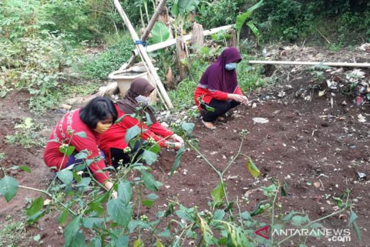 """Kelurahan Kebagusan manfaatkan lahan kosong jadi """"urban farming"""""""