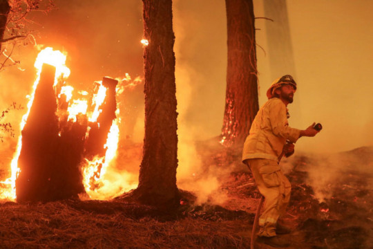 Kebakaran hutan California makin merusak, suhu meningkat