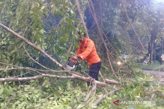 Material pohon tutup ruas jalan Kelok 44 Agam akibat angin kencang