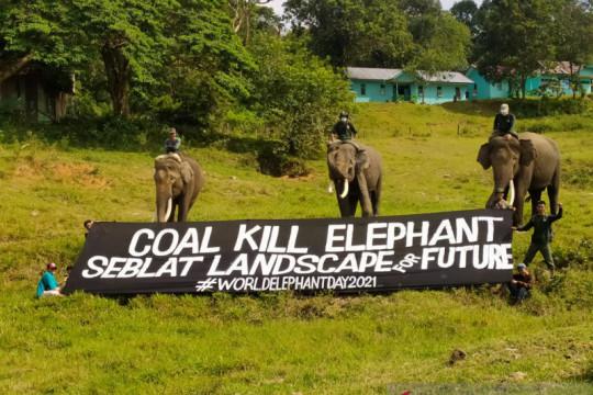 Tambang batu bara ancam habitat gajah Sumatera di Bengkulu