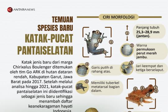 Temuan spesies baru katak-pucat pantaiselatan