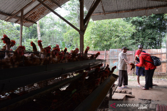 Sumbangsih dokter hewan tangani pandemi COVID-19