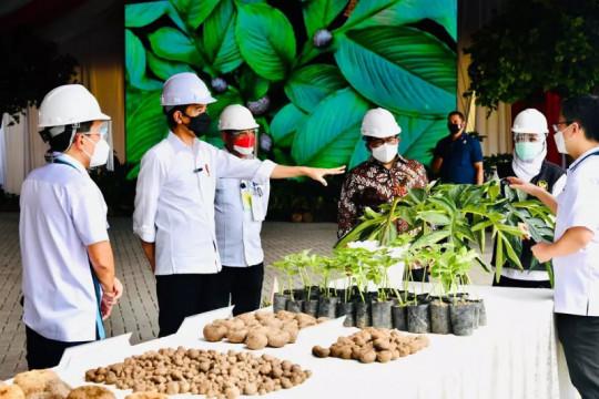 Presiden terkesan melihat ribuan ton porang siap ekspor di Madiun