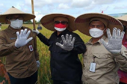 Wamentan dukung Sambas jadi lumbung beras Kalimantan Barat
