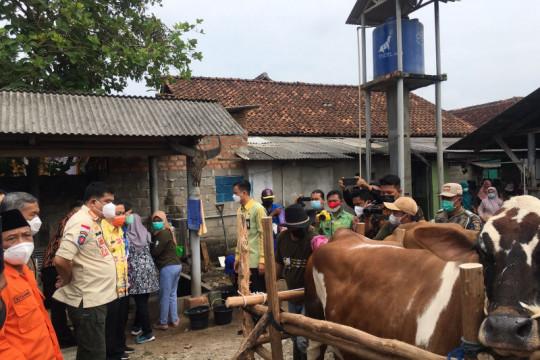 Lampung Tengah jadi daerah percontohan pengembangan sapi Belgian Blue