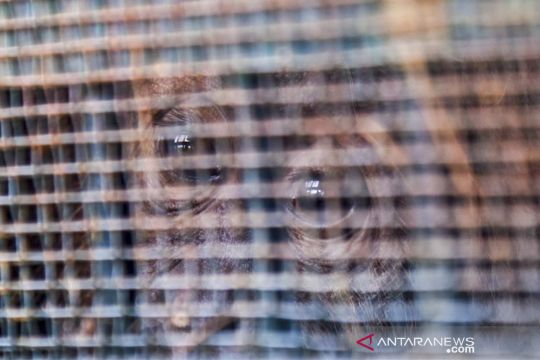 Pemulangan orangutan Sumatra