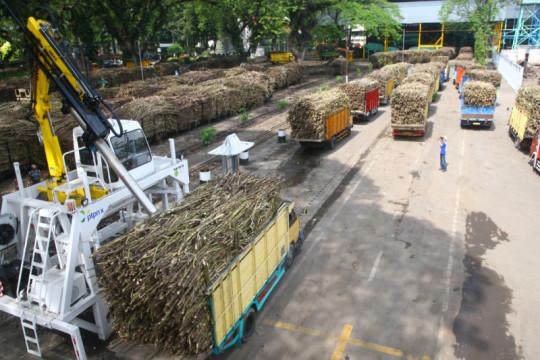 Indef: Perlu terobosan pada industri gula nasional