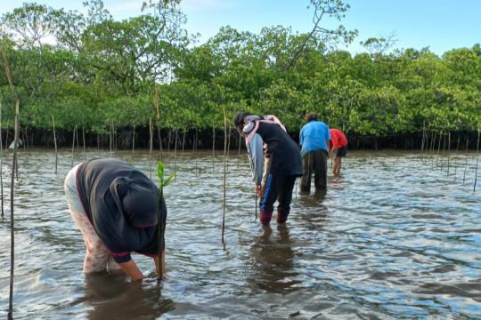 BRGM: Rehabilitasi mangrove investasi jangka panjang